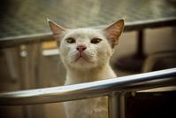 Cat snooping 1