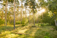 sunny forest scenery
