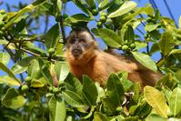Litle monkey