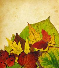 Leaf Collage 8