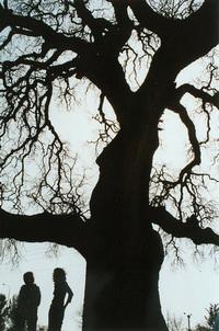 The old oak 1