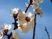 spring scene in switzerland 2