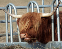 This animal needs a haircut