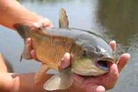 fishy fishy