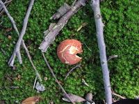 Mushroom 1