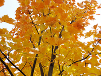 Golden Photo Files leaves