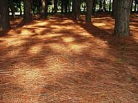 Shade of the tree 1