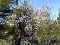 Spring In Tehran