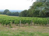 Grapeyards[1]