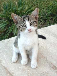 Little Tomcat