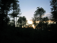 Waldspaziergang 1