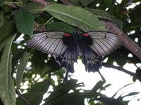 Butterfly Conservatory 3