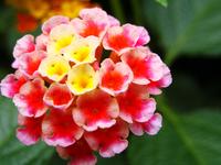 micro flor
