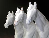 three horses 1