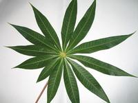 Closeup view of a leaf