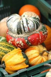 Pumkins, squashes & gourds 3