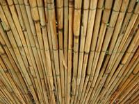 Reed mats