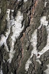 Bark 4