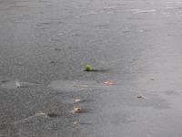 Tennis ball on ice