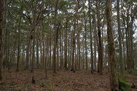 lake brou trees 6