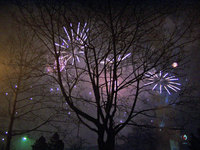 Fireworks over trees 2