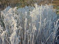 Glazed frost 1