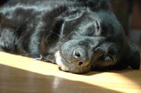 Sammi the Dog 3