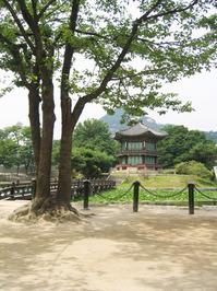 Kyeongbokkung palace 4