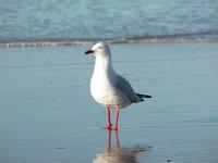 Seagull Alone 1