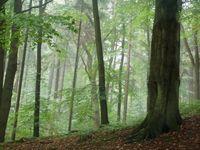 Sachsenwald 1