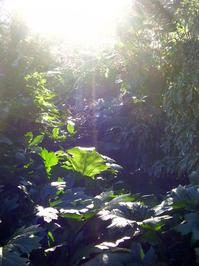 gardens I
