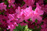 Flowers for Mom 1