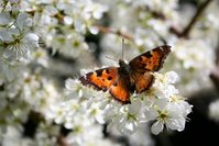 Spring Pollinator 1