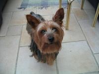 my dog 1