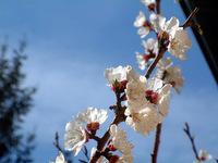 spring scene in switzerland