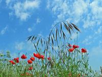 Midsummer Fields 2