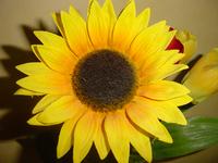 Fake Sunflower
