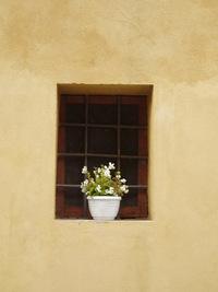 flowerpot in italy