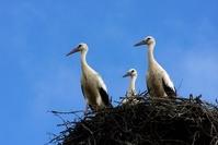family stork