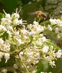 Tandem Bees