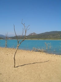 dead tree at a lake