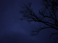 Creepy tree branches