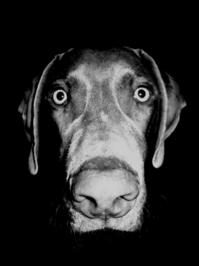 Black-Eyed Dog