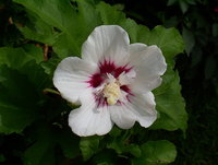 Flowers at my garden 4