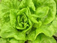 Salade 02