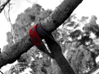 Lead on a tree
