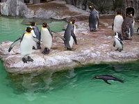 Japanese zoo 5
