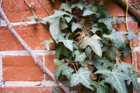 Leaves against Brick