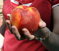 King size peach