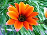 small flower macro
